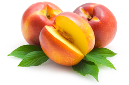 Wholesale Nectarine Trees